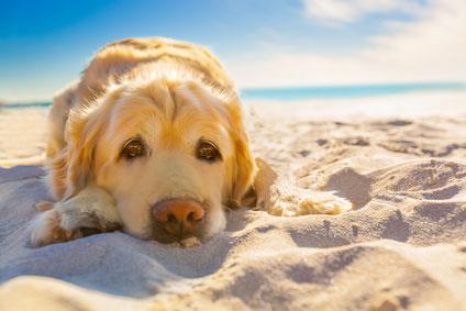 Urlaub mit Hund Ostsee Ferienwohnung / Ferienhaus