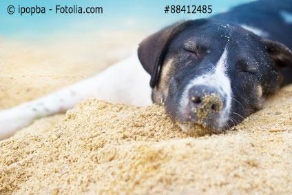 Ferienwohnung Warnemünde Mit Hund