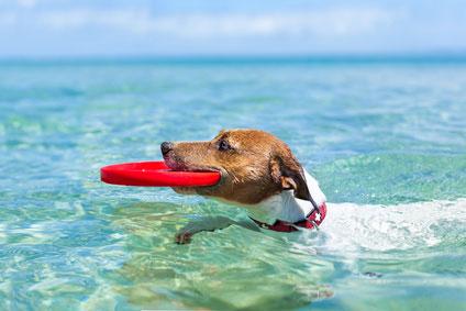 Urlaub mit Hund Ostsee Ferienhaus/Ferienwohnung Insel Usedom