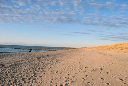 Urlaub mit Hund Ostsee günstig Fischland-Darß-Zingst Ferienhaus Ferienwohnung