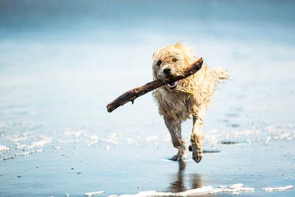 Urlaub mit Hund Ostsee Lübecker Bucht Ferienhaus, Ferienwohnung