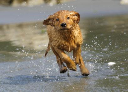 Urlaub mit Hund Ostsee Mecklenburger Ostseeküste Ferienhäuser & Ferienwohnungen